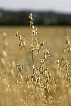 Tør du leve en uge uden korn?