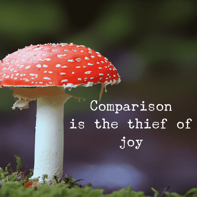 Comparison is the thief of joy. Stop comparing yourself to others - read here why that's such a bad idea! --> MyCopenhagenKitchen.com