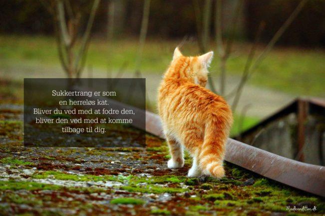 Sukkertrang er som en herreløs kat. Bliver du ved med at fodre den, bliver den ved med at komme tilbage til dig. --> Madbanditten.dk