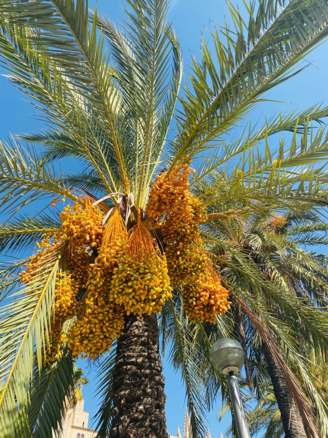 Efterårsferie på Mallorca - Mallorca i oktober